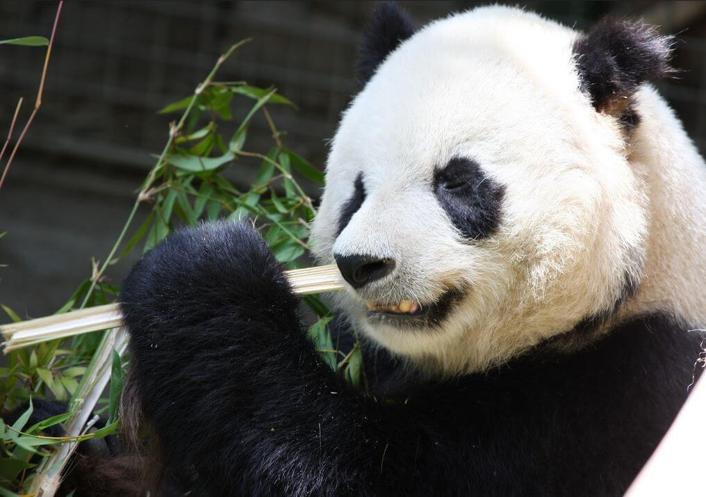| Google Panda and what it means for your website and SEO